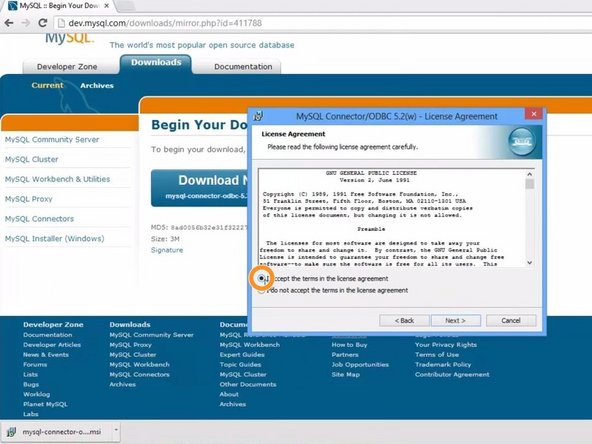 Accept the standard MySQL license agreement and click next.